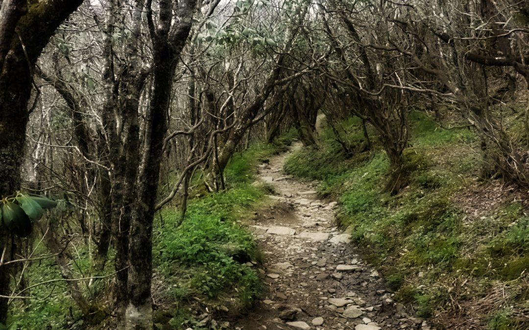 Into the Landscapes of Lent