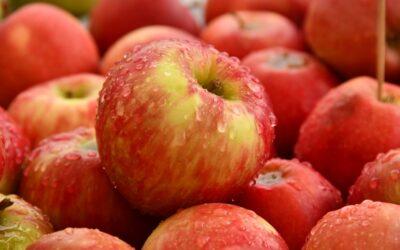 Apple Pick-up – September 17